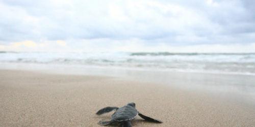勇気を持って海に飛び出す子亀
