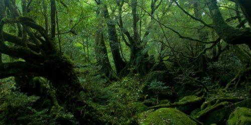 無意識と森