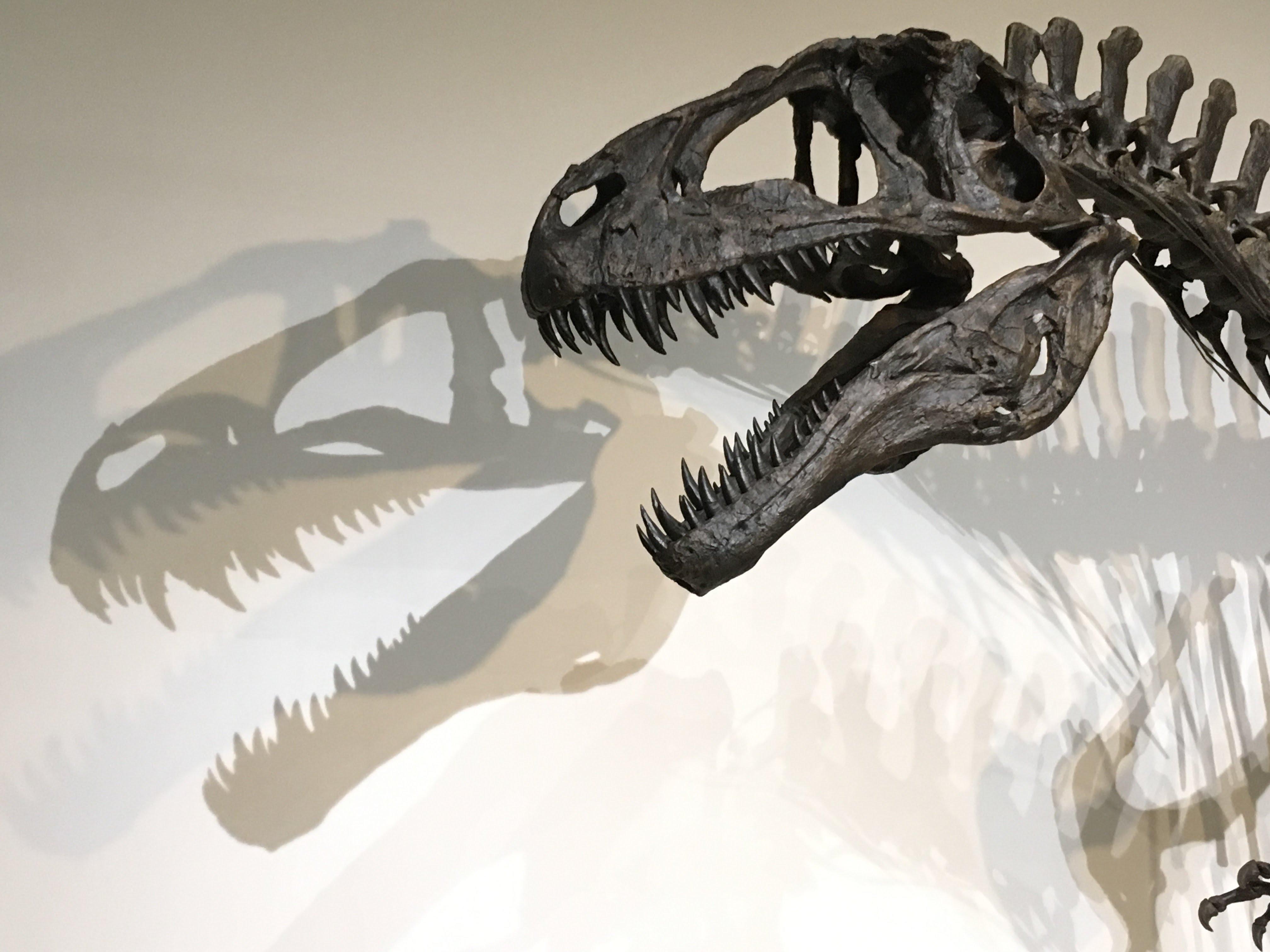 福岡市科学館、恐竜、恐竜展
